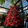 Thumbnail image for 10 Great Holiday Gift Ideas From Callaway Gardens!